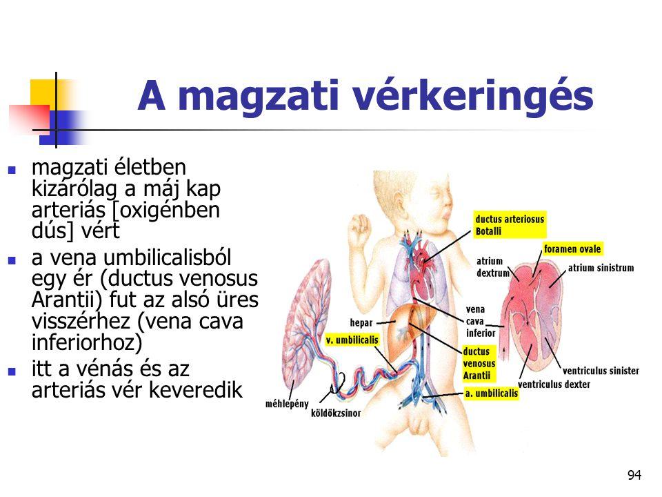 A magzati vérkeringés magzati életben kizárólag a máj kap arteriás [oxigénben dús] vért